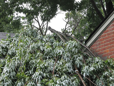 emergency tree service in san antonio