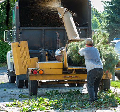san antonio tree service free estimate