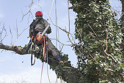 professional tree pruning service